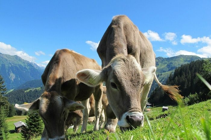 What A Wonderful European Beef raises awareness for European beef
