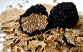 why truffles are so expenive white truffle season gafencu magazine feature
