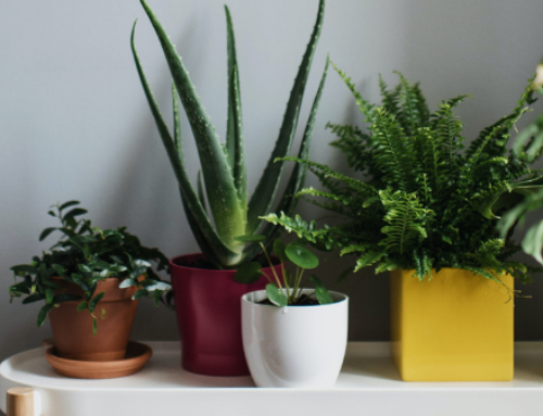 Seven indoor plants to improve the feng shui in your home